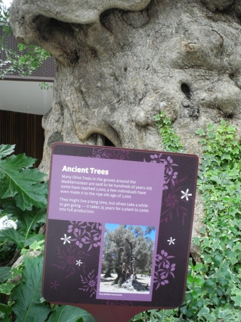 Ancient Trees?
