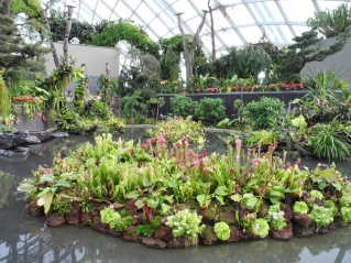 Beautiful garden at the lost world
