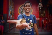 Burung vihara, bukan burung gereja.