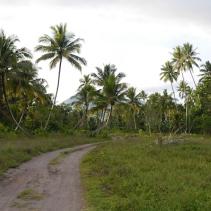 Road to Marimbati (2)