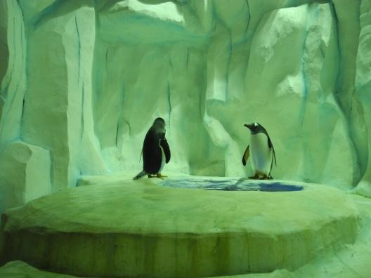 Penguin at Ocean Park