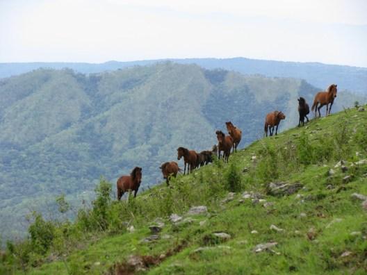 Horse Pack Near Summit of Mundo Perdido