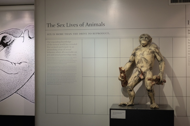 The Sex Lives of Animals
