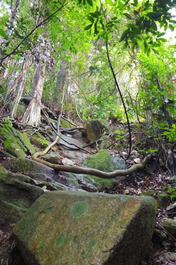 Rock Path, Bukit Timah Nature Reserve.