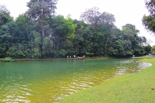 MacRitchie Reservoir