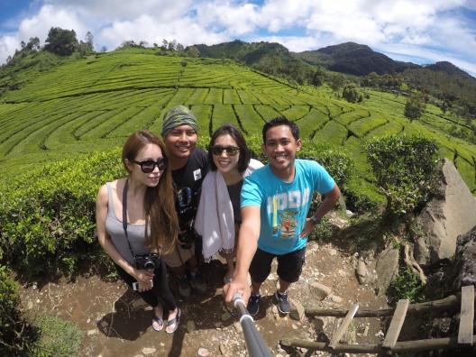 Walini Tea Plantation