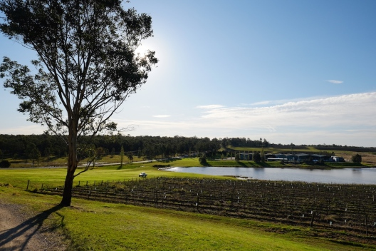 Vineyard Hunter Valley