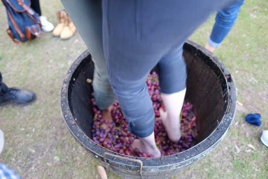 Grape Stomping Hunter Valley