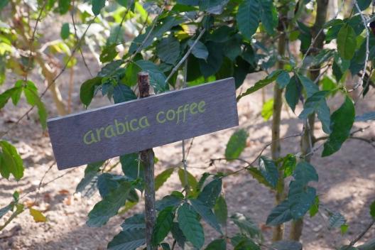 Arabica Coffee Bali Pulina