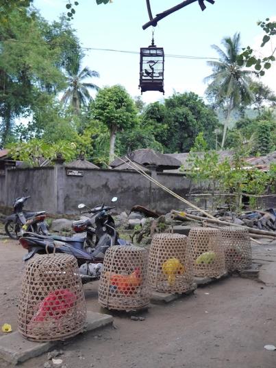 Desa Adat Tenganan