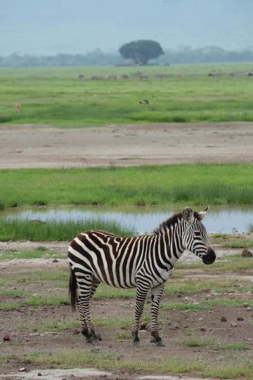 Ngorongoro Crater