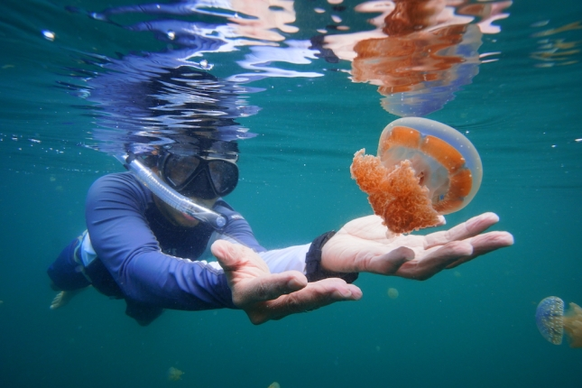 Jellyfish Lake Togean