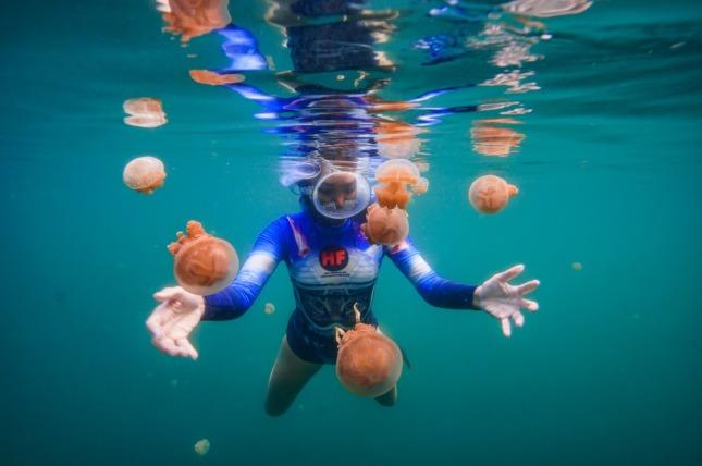 Jellyfish Lake Togean