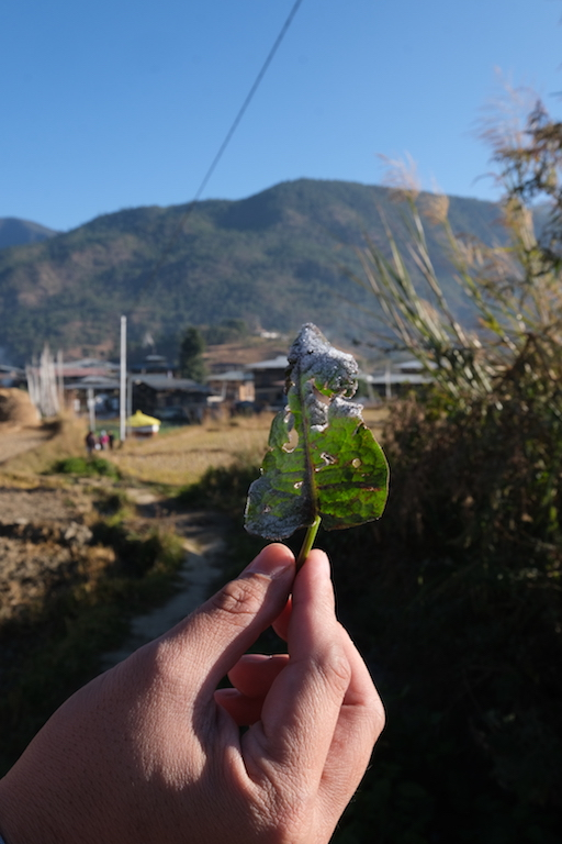 Chimi Lhakhang Village